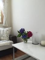 6月...アジサイの季節ですね。自宅にアジサイの花を飾りました。